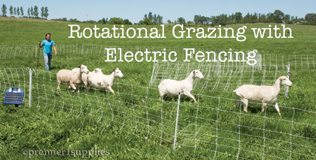 Rotational Grazing For Goats Using Electric Fencing Bent